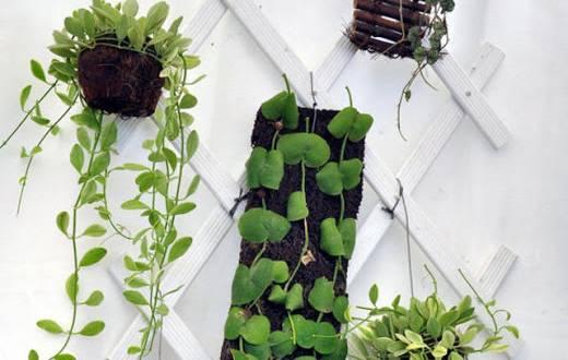 Tips Menata Tanaman Dinding Agar Terlihat Cantik
