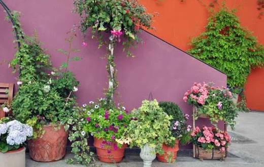 tanaman-pot-serasi